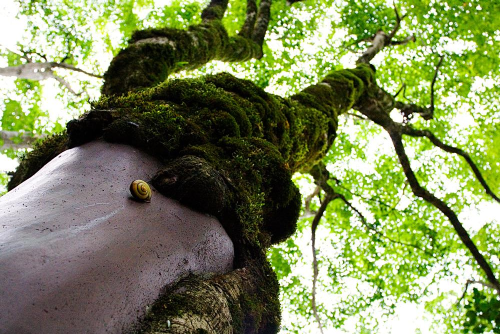 Snail on Tree with Moss - Classical Acupuncture from The Dao Acupuncture
